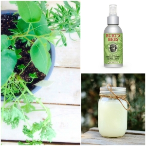 Natural-Repellents_mini